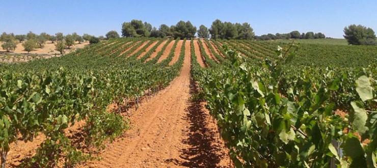 Muestreo variedad Chardonnay