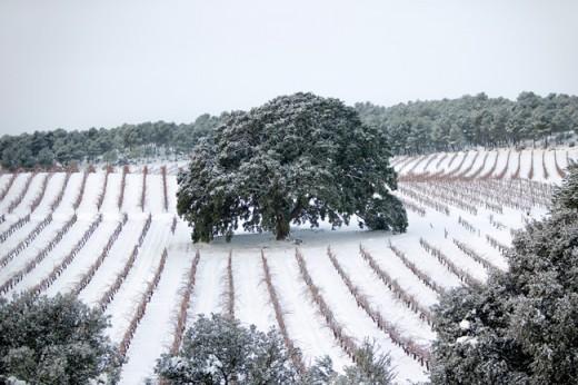 Viñedos de la finca agrícola El Renegado en Invierno