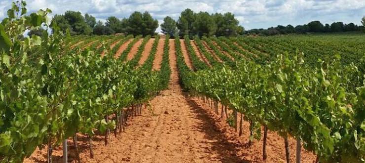 Muestreando la uva de nuestros viñedos