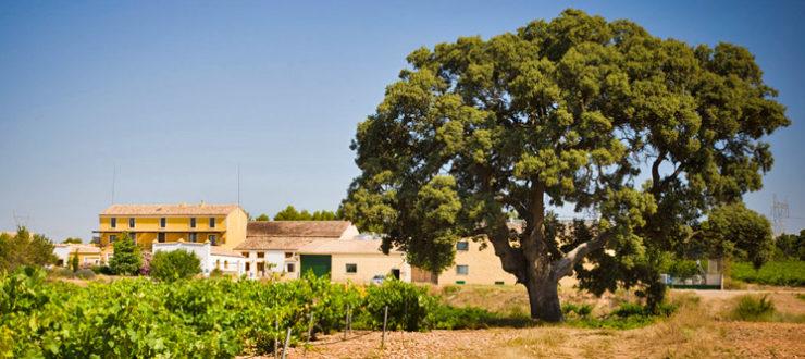 árboles monumentales