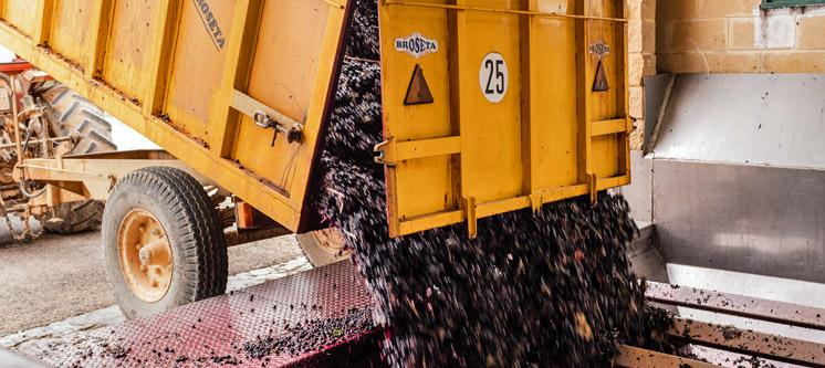 Decarga de uva