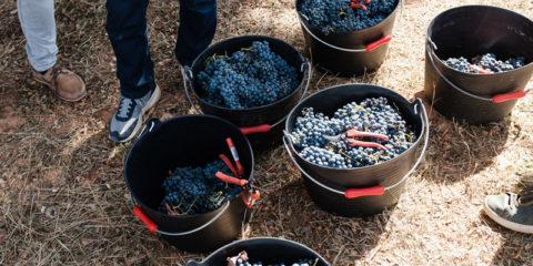 Los mejores vinos de Bodegas Nodus